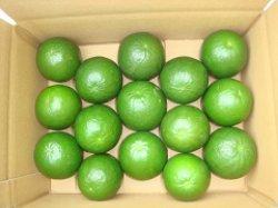 画像1: 無農薬レモネーディア