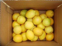 画像1: 冷凍用無農薬レモン小ぶりちゃん