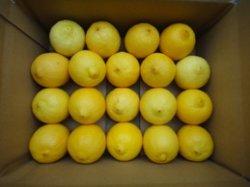 画像1: 無農薬フルーツレモン:小ぶりちゃん