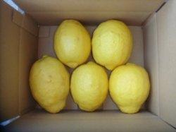 画像1: びっくり超特大無農薬フルーツレモン