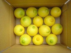 画像1: 無農薬フルーツレモン3ケースセット