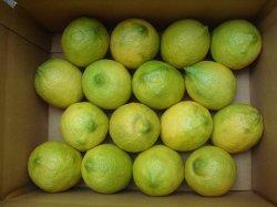 画像1: 季節はずれの無農薬レモン